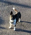 Holly – RESERVED