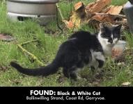 Black & White Cate