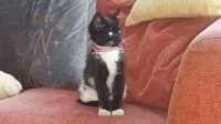 Black and white female cat. Missing from Ballincollig