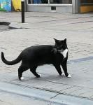 Black cat found in city centre
