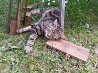 Brown multicolored male cat lost around the Ballinrostig, upper Aghada area