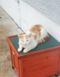 Tabby ginger found bishopstown