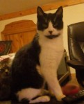 Male Cat lost in Limerick City