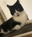 Male black and white lost in Galway