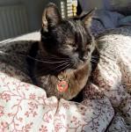 Black Cat missing Albert Road area