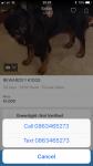 Reward for Bernese mountain dog