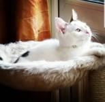 """Missing cat 'Max"""""""