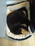 Male cat missing Artigallivan, headford, crosstown killarney