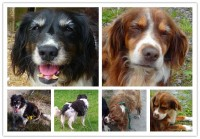 Moycullen Galway – 2 Senior dogs need your help to find the way home