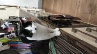 Missing Cat in Ovens