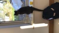 Male grey cat lost in Cork