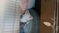 Missing kittenFermoy, Barrysboreen