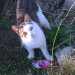 Male cat missing in Inishannon