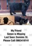 Small Male Black Cat lost