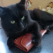 Black long hair cat missing in farranree