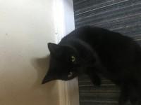 Black cat gone missing upper Dublin hill Cork