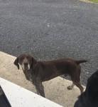 Lost Dog Limerick