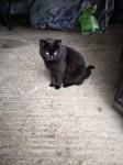 Lost Black Cat in Togher