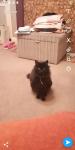 Female black fluffy cat lost around ballinlough/Douglas area