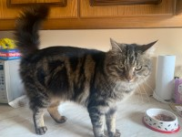 Young Male Cat Missing in Ballyorban/Moneygourney Area, Cork