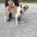 Male dog found Farnanes/Farran/Crookstown area
