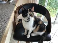 Female cat lost in Clare