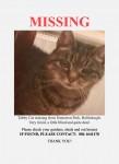 Female Tabby cat lost in Ballinlough