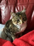 Oscar , Friendly cat lost Ballygarvan/Airport