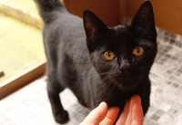 black female cat (approx. 8 months old)