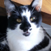 Black & White cat lost in Creggane/Gortroe near Lomabardstown