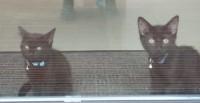 TWO BLACK KITTENS LOST – BLARNEY/NEWCASTLE AREA