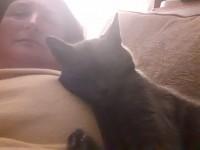 Black/Smokey grey cat lost in Brandon. Cat's name is Smokey .