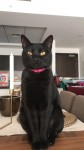Lost Black Cat