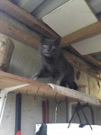 My cat iscalled Smokey and has a smokey grey colour with no patch of different colour.  Smokey is nearly 14 years old and went missing from Bandon, near the courthouse, last seen running up the hill.