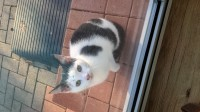 Cat found in Co. Limerick (Ballysheedy/Lisnalty area)