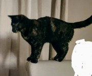 Female black cat lost in Ballyrichard/Waterock area of Midleton.
