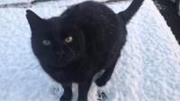 Black cat lost in West Cork