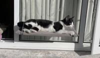 Male kitten lost in Bishopstown