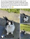 Lost cat in Midleton