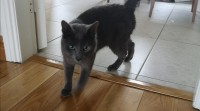 Male Cat Found in Carrigaline