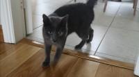 Male Cat Found in Carrigaline