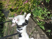 Brown and White Kitten lost in Ballintemple