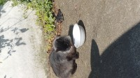 Found – Black long haired young cat