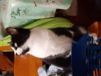 Female cat lost in Bealnamorrive