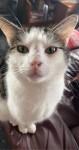Tabby male cat lost in Killorglin Kerry