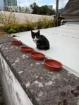 Black and white stray kitten in Cork city