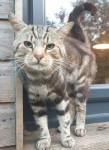 Male cat found in Glenville area.