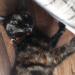 Female cat lost in Innishannon
