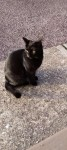 Small 2yr Old Female Cat Missing Durrus Area