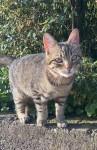 Male cat lost in Kerry
